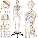 TecTake Squelette taille grandeur nature modèle anatomique du squelette humain - diverses modèles - (Squelette | No. 400502)