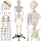 TecTake modelo médico anatómica esqueleto humano esquelético 181cm