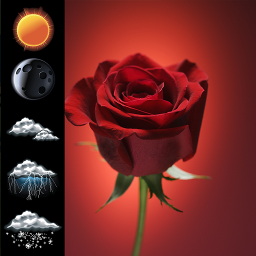 Clock Weather Red Rose