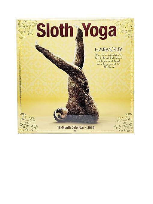 Amazon.com : 2019 Sloth Yoga 18 Month Wall Calendar : Office ...