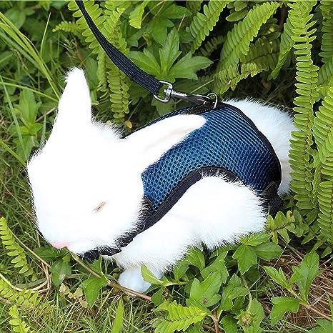 Petcomer Arnés Conejos con Correa Elástica para Animales Pequeños Conejos Hámsteres Gatos (S, Azul