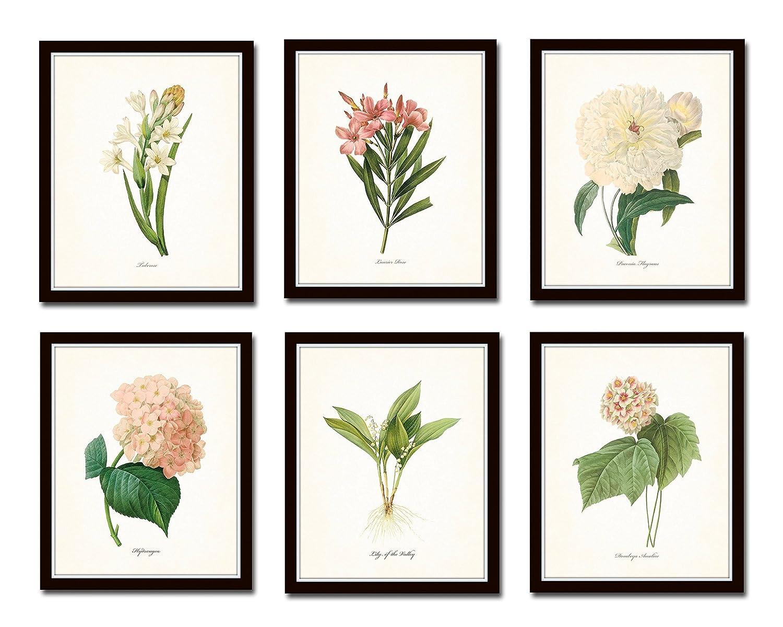 Botanical Garden Print Set No.10 Set of 6 Giclee Botanical Prints Home Decor Wall Art - Unframed