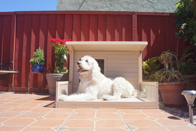 amazoncom ecoflex santa fe chalet style dog house pet supplies - Beautiful Dog Houses
