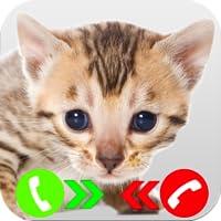 Fake Call From Kitten Prank