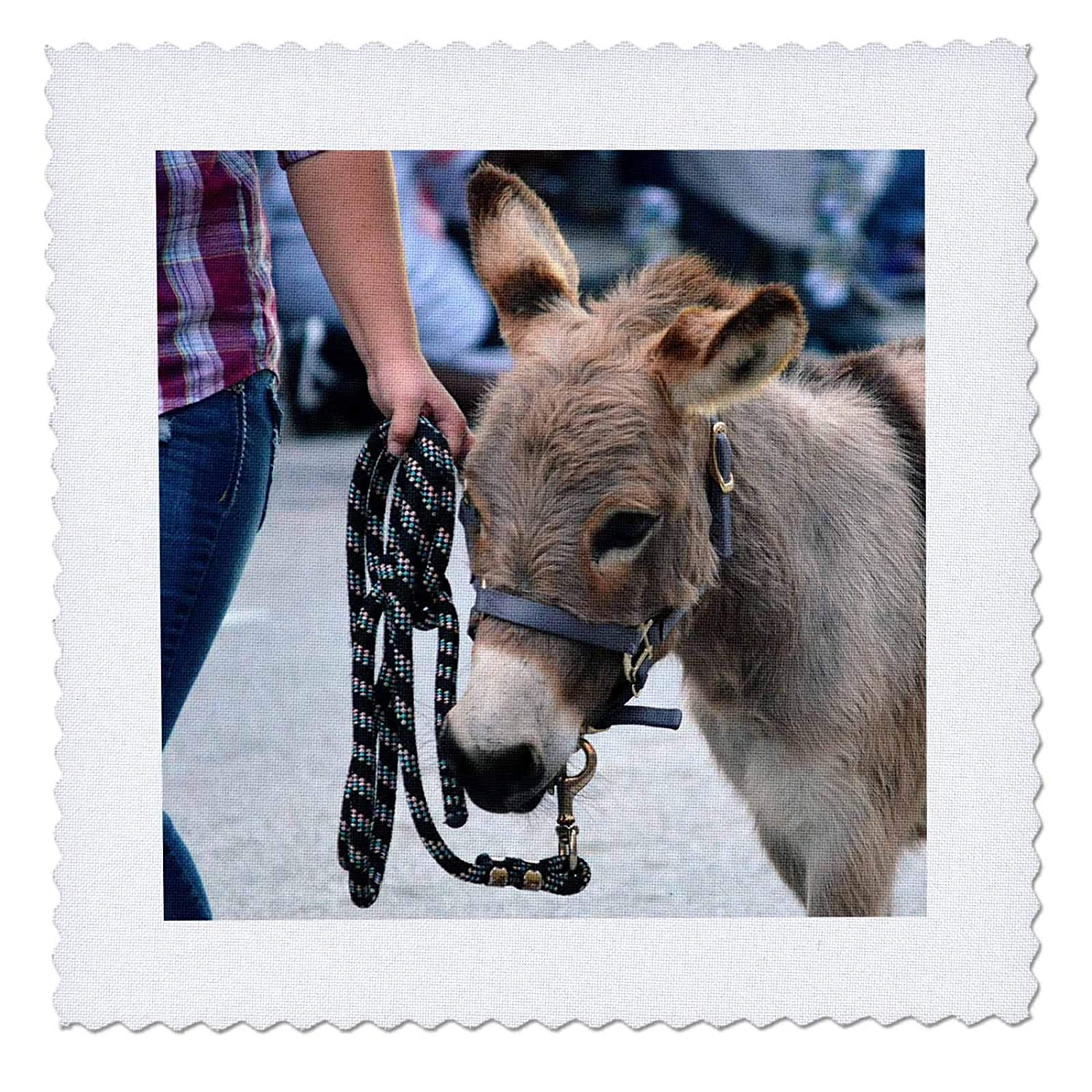 qs/_294155/_1 Miniature Donkey Head Halter Animal 10x10 inch Quilt Square 3dRose Susans Zoo Crew Animal