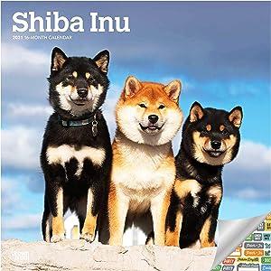 Shiba Inu Calendar 2021 Bundle - Deluxe 2021 Shiba Wall Calendar with Over 100 Calendar Stickers (柴犬 Gifts, Office Supplies)