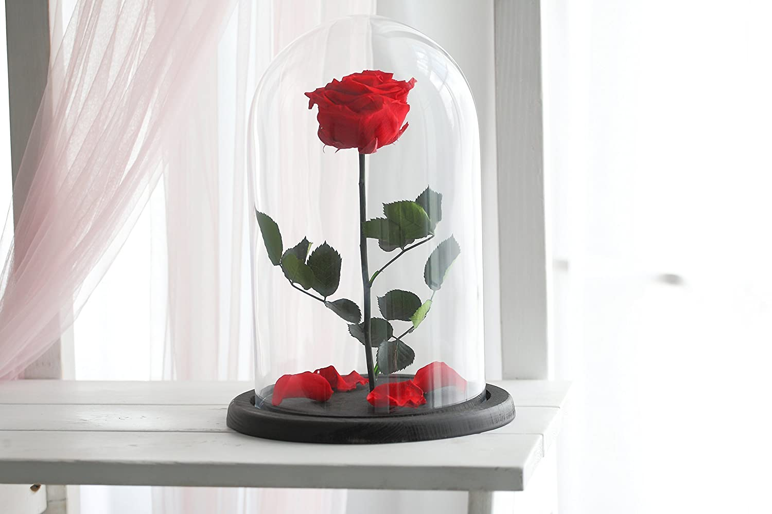 Amazon Beauty And The Beast Rose Live Forever Rose Enchanted