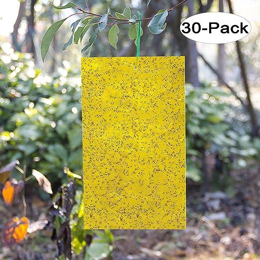 Kensizer - Trampa adhesiva de doble cara amarilla para insectos de ...