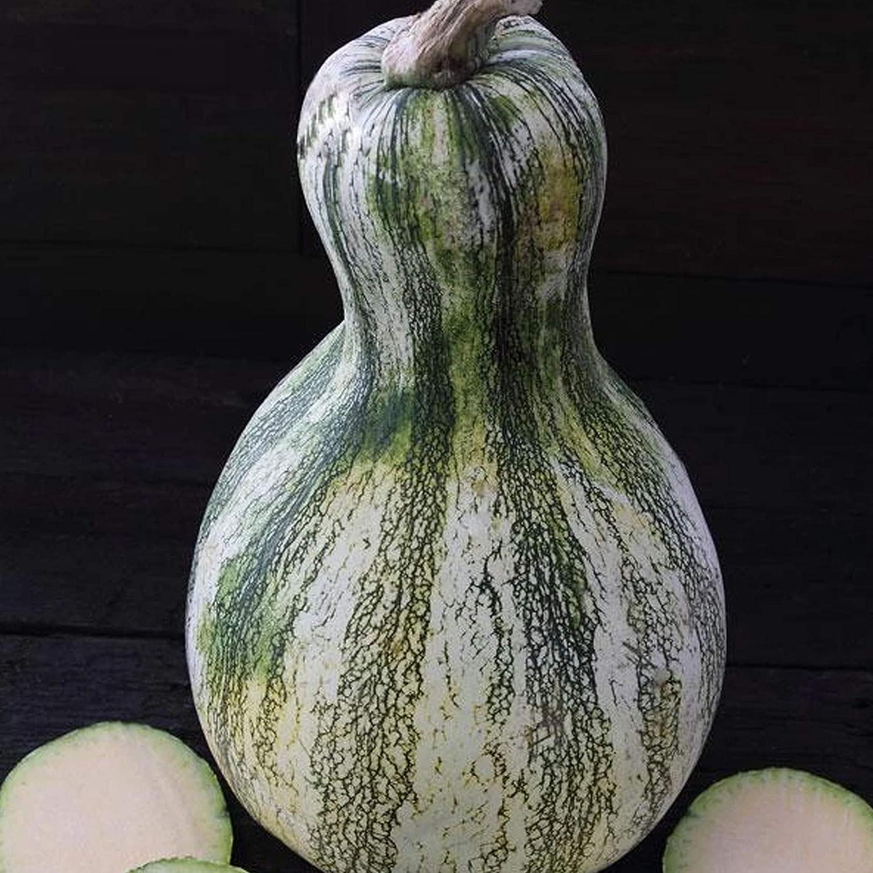 Green Stripe Cushaw Pumpkin Seed - 4 g ~20 Seeds - Heirloom, Open Pollinated, Non-GMO, Farm & Vegetable Gardening Seeds