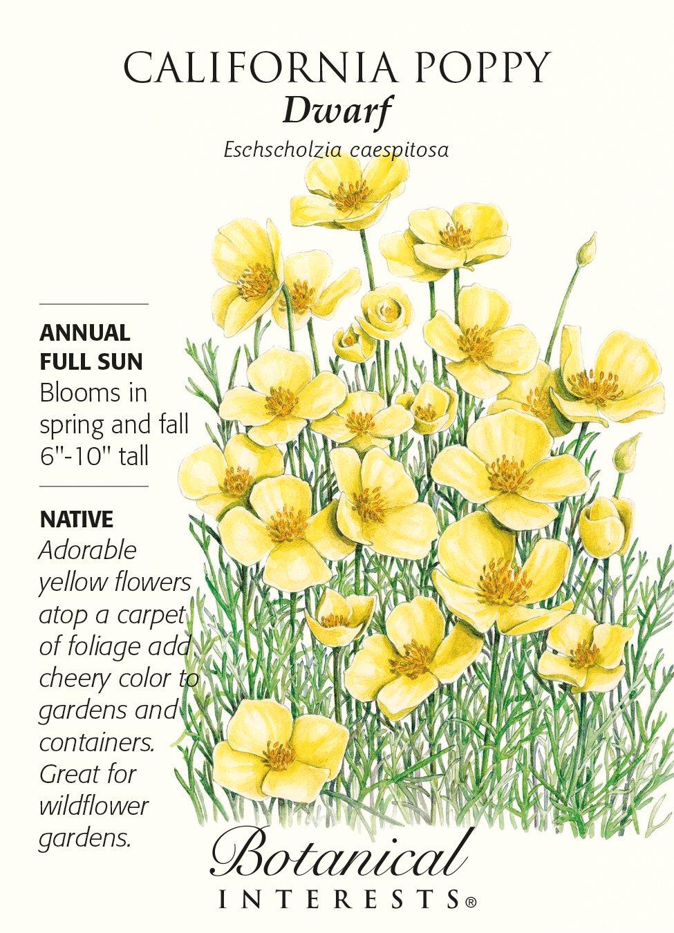 Amazon Dwarf California Poppy Seeds 50 Grams Botanical