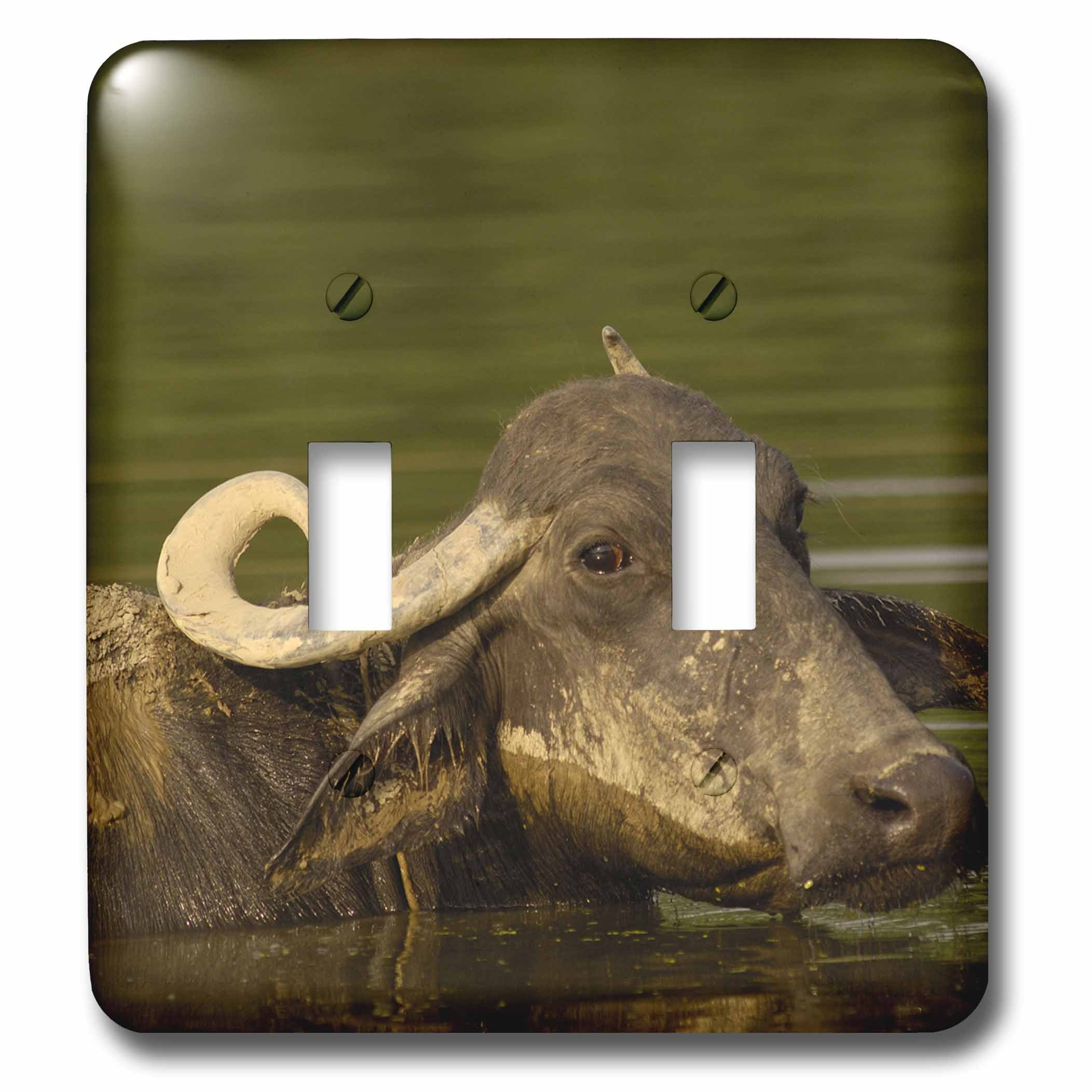 3dRose lsp_70868_2 Water Buffalo, Wildlife, Bharatpur Village, India-As10 Pox0543 Pete Oxford Double Toggle Switch