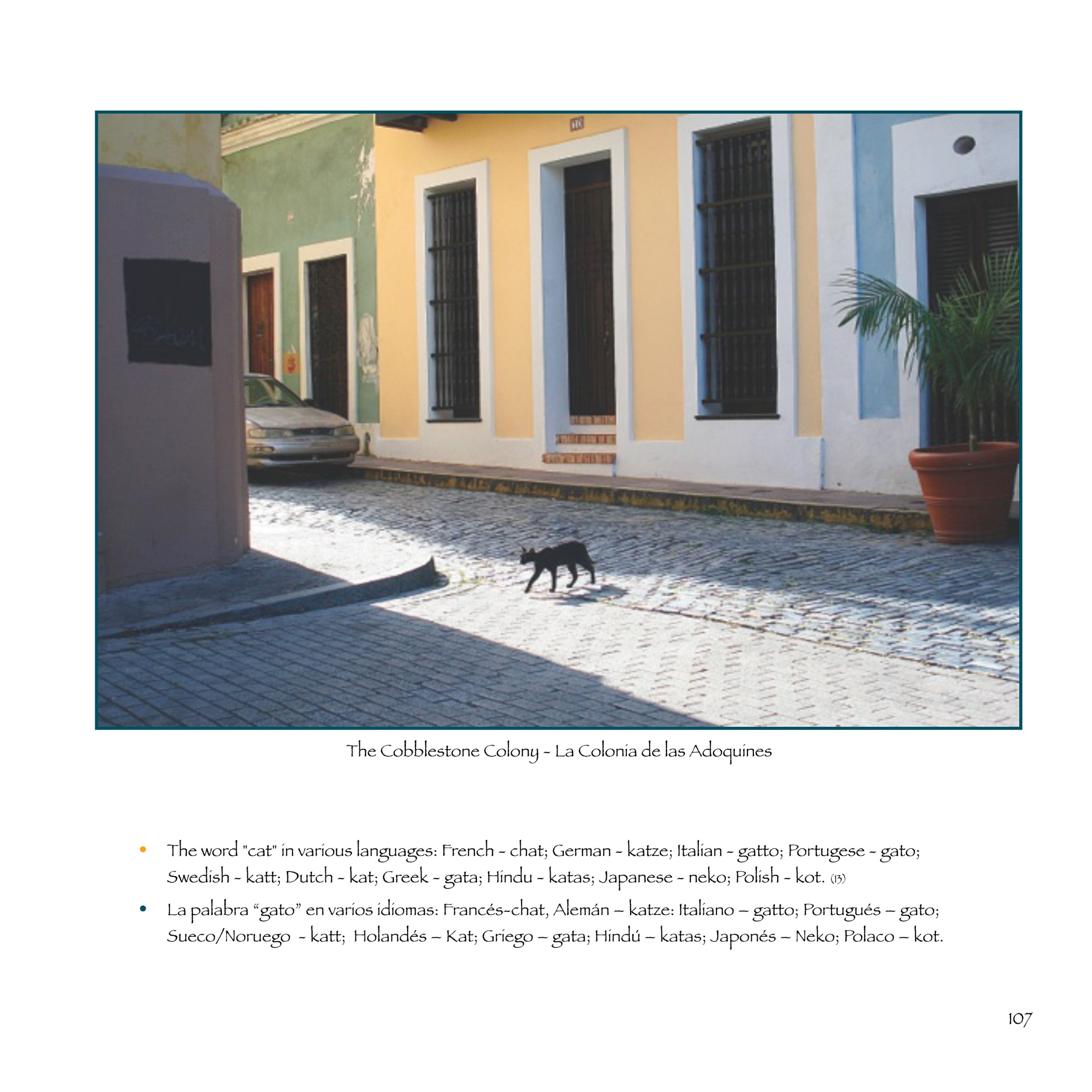 Cobblestone Cats: Cats of Old San Juan