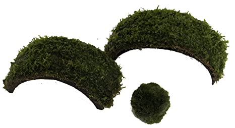manplan Dos Puentes de Coco con Musgo Java y Cladophora de 3 a 4cm. Plantas
