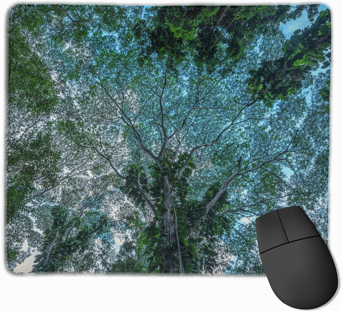 Cute Mouse Pad for Laptop Computer Non-Slip Small Home Travel Mouse Pads for Man Womenlooking-Up-Into-The-Canopy-of-Trees