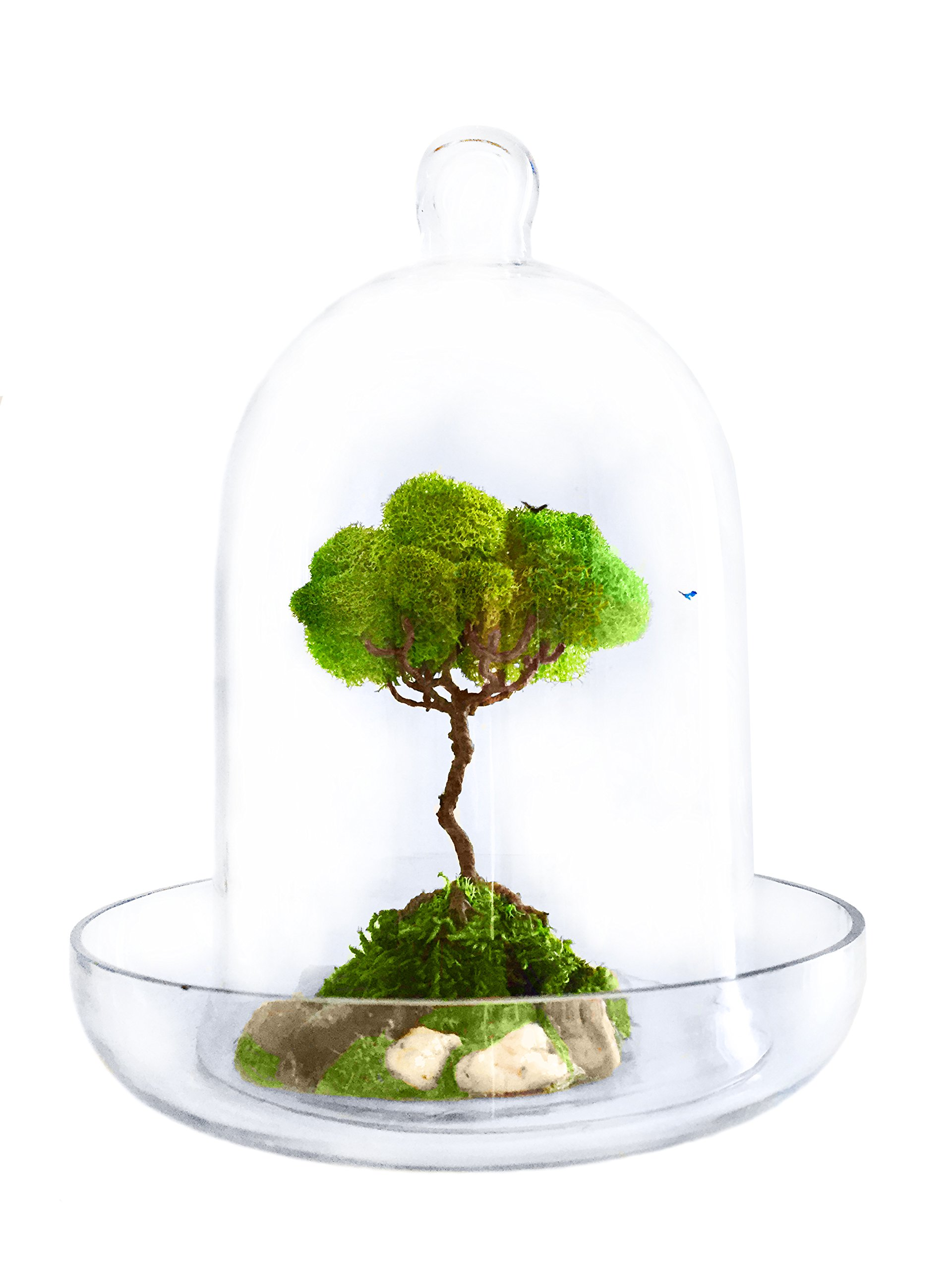 Artree Organic Glass Dome Terrarium - Artificial Plant Decoration For Office And Home Bonsai Tree | House Decor | Room Decor | Gifts For Women | Gifts For Men