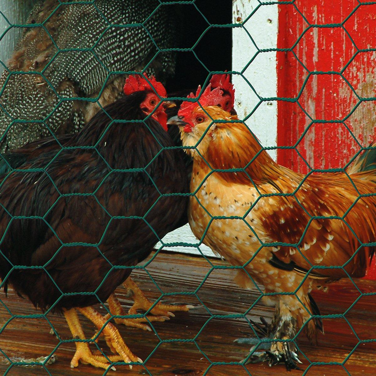 Garden Zone 24inx25ft 1in Green Vinyl Poultry Netting by Origin Point (Image #3)