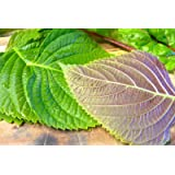 "1000 KOREAN PERILLA SEEDS,""Shiso"" (Perilla Frutescens) Korean specialty Herb"