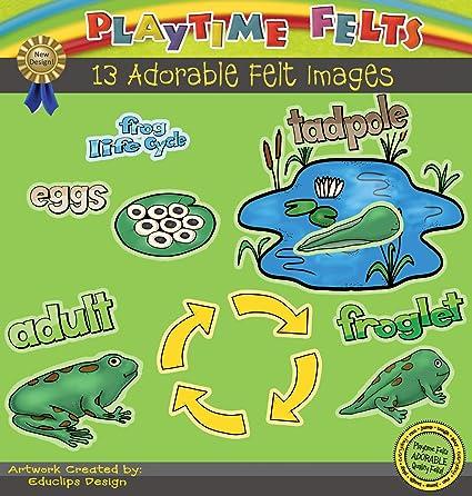 life cycle Life cycle of a frog felt frog