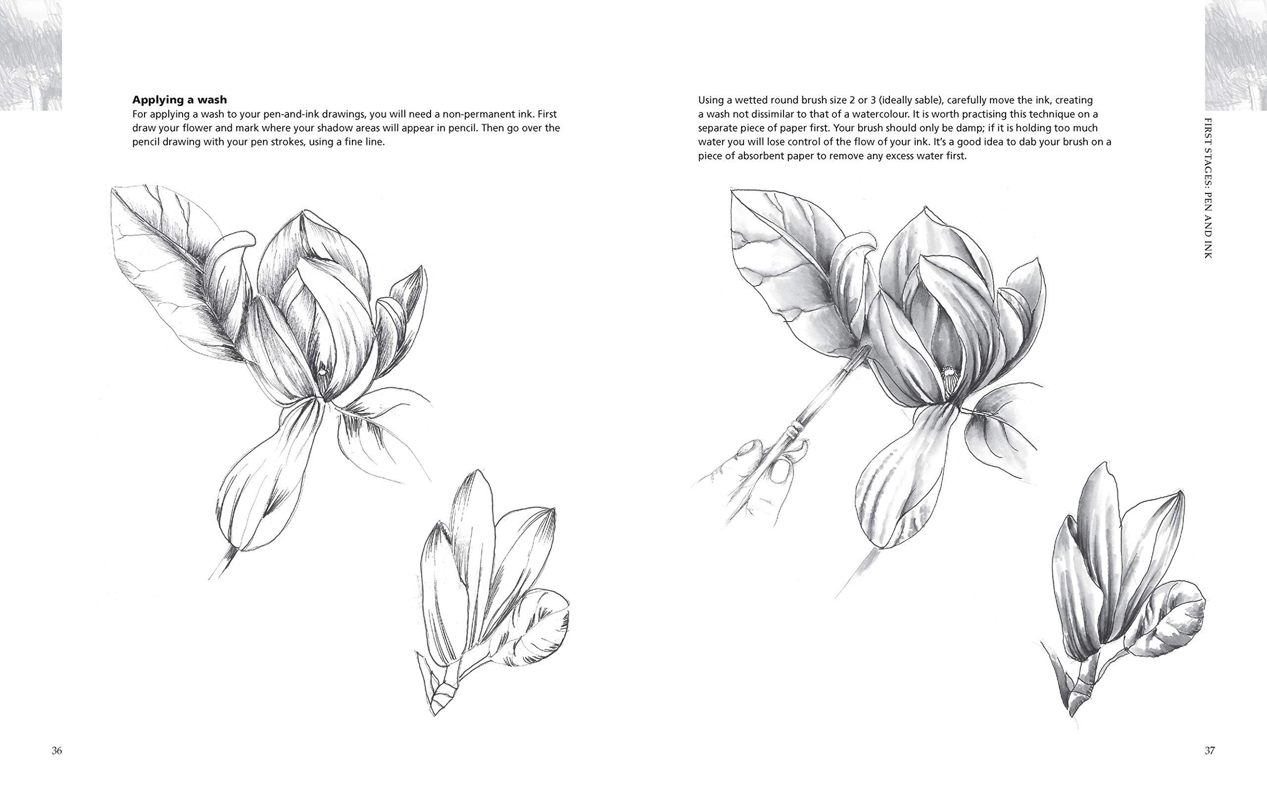 Drawing Flowers Winch Jill 9781782126256 Amazon Com Books