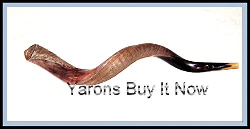 New 40 Yemenite Shofar Kudu Horn Half Polished Natural