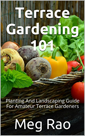 Terrace Gardening 101: Planting and landscaping guide for amateur terrace gardeners