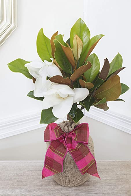 Amazoncom Southern Magnolia Housewarming Gift Tree By The Magnolia