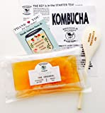 """Large 4"""" SCOBY + 1.5 cups of starting Kombucha + Detailed INSTRUCTIONS!"""