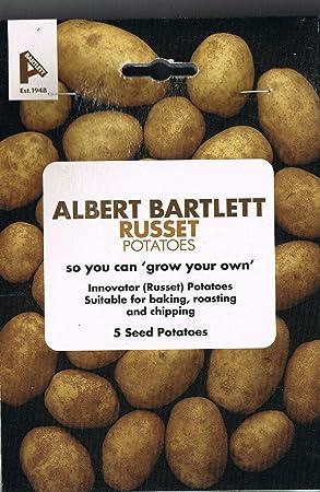 Vegetable Taylors Albert Bartlett Seed Potatoes Russet 5 Tubers