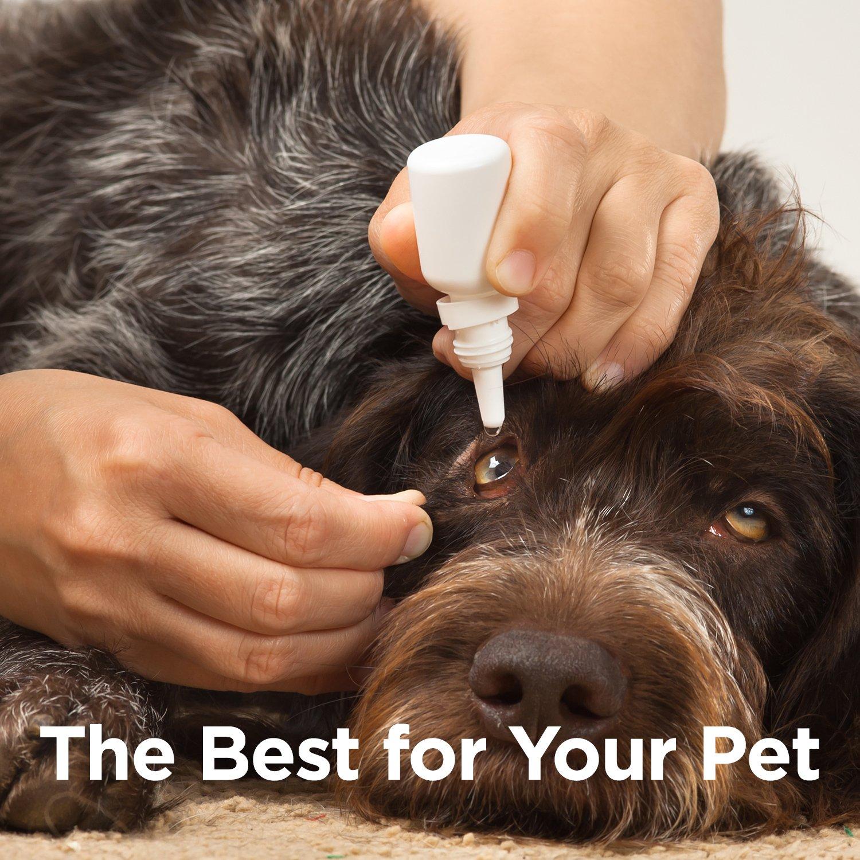 Amazon.com: OcluVet – Gotas de ojos para mascotas ...