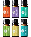Pure Body Naturals Essential Oils Set, 6 Count - 10 ml