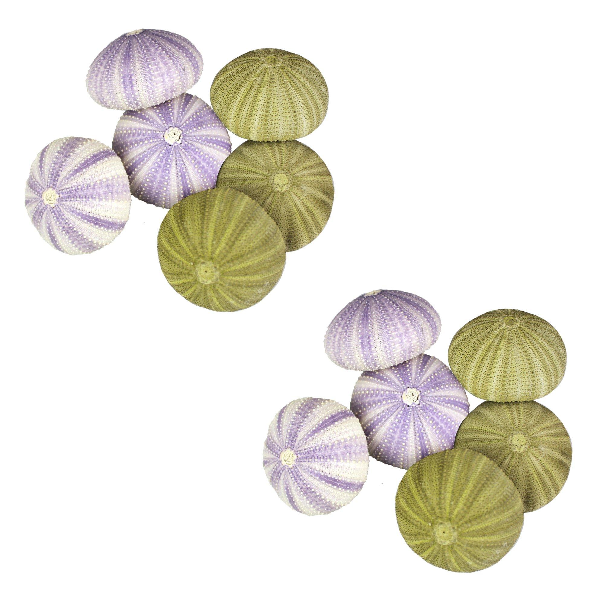 NW Wholesaler - Natural Sea Urchin Shells for Home Decor, Beach Decor, Terrariums, Air Plants, Arts & Crafts (Bundle of 12, Combo)