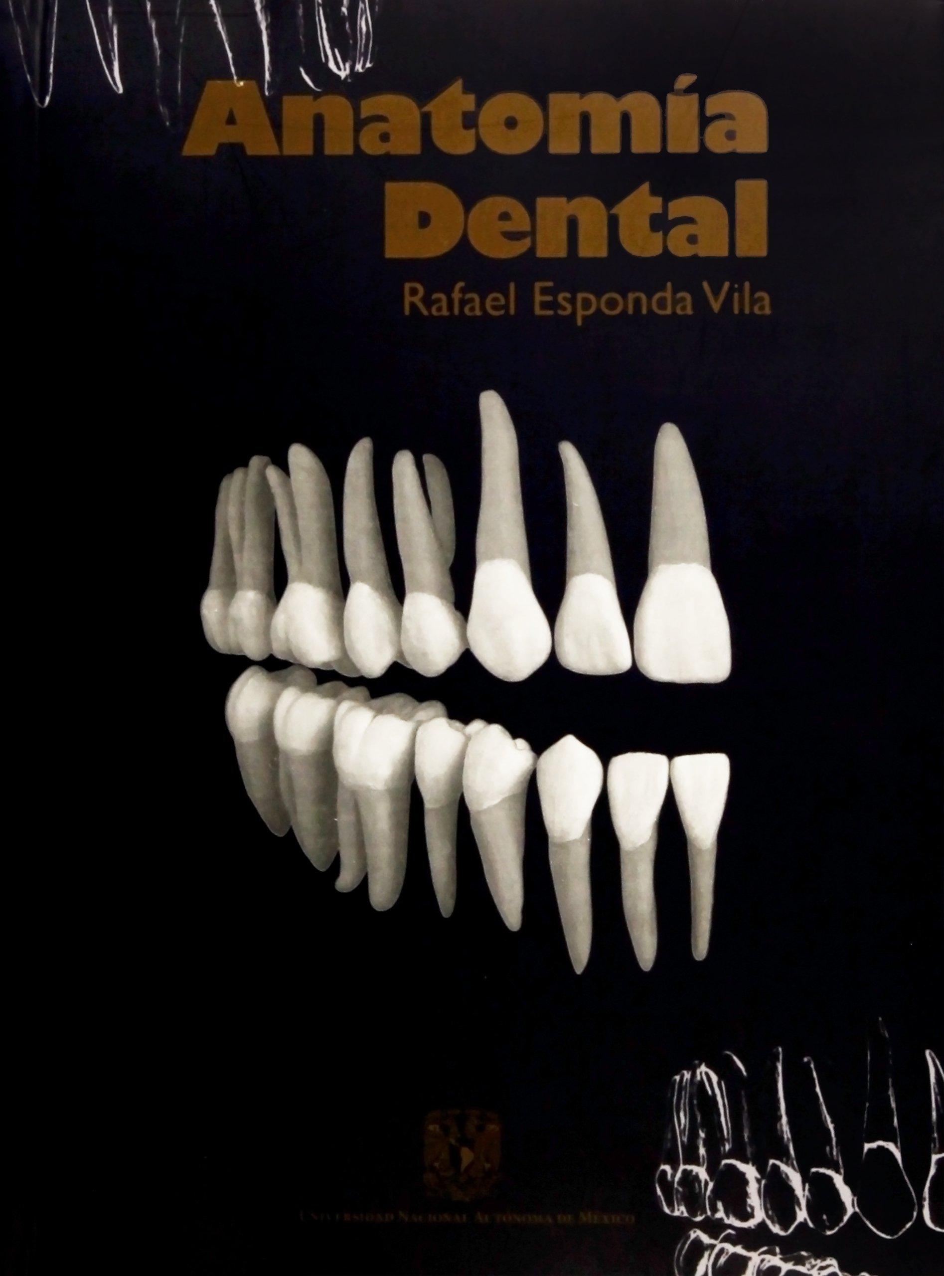 Anatomía dental: Rafael Esponda Vila: Amazon.com.mx: Libros