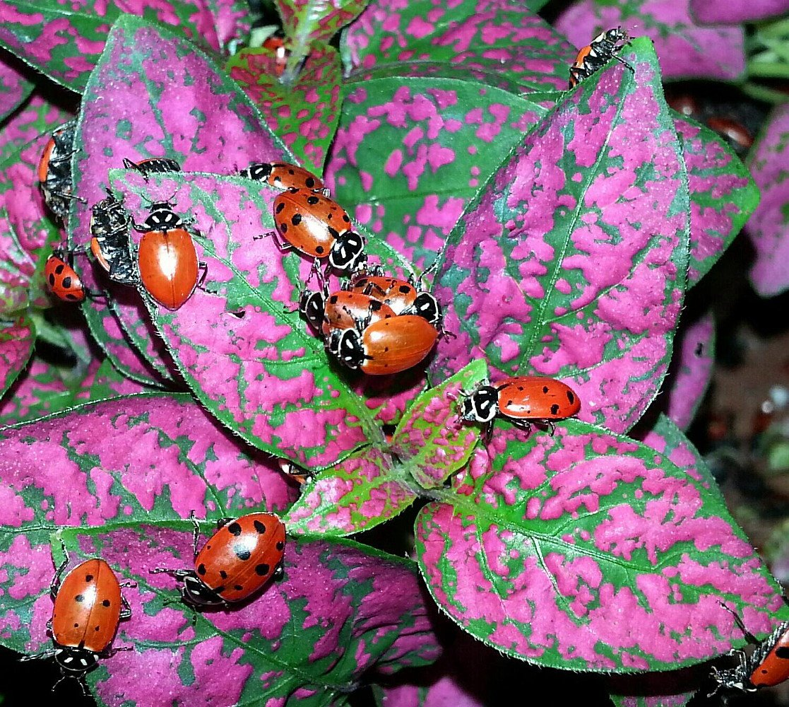 amazon com live ladybugs approximately 4500 hirt u0027s nature