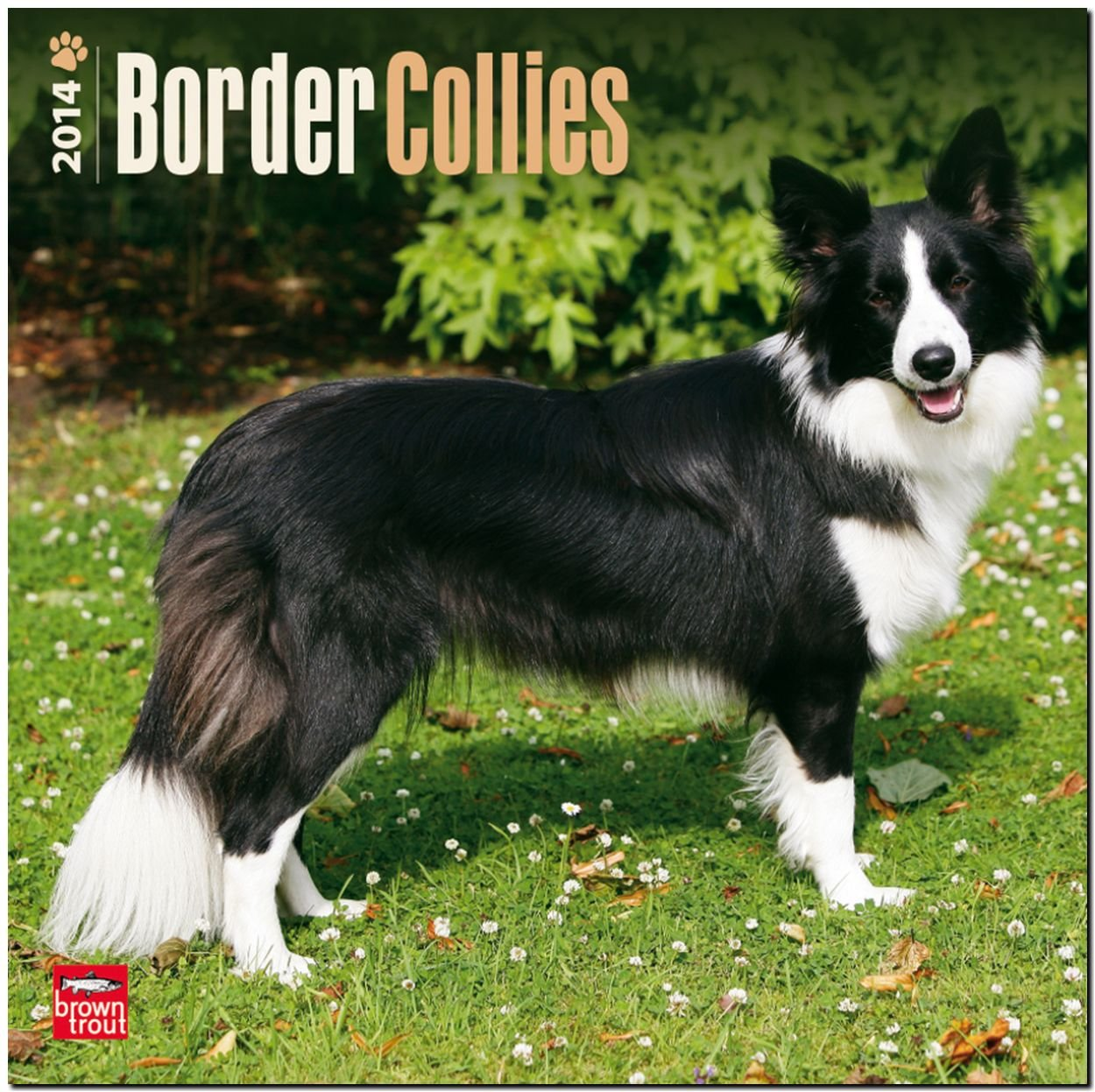 Border Collies 2014: Original BrownTrout-Kalender [Mehrsprachig] [Kalender]