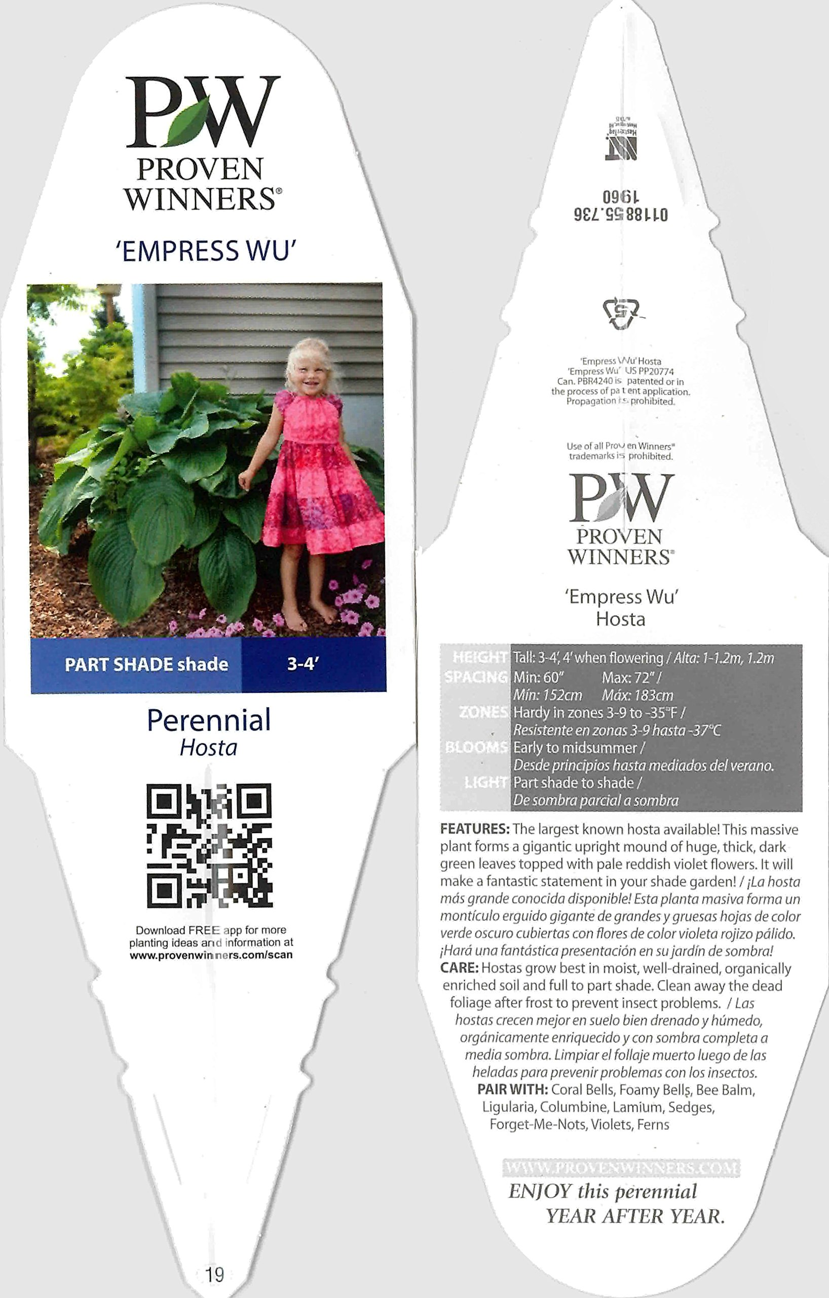 Shadowland Empress Wu (Hosta) Live Plant, Green Foliage, 0.65 Gallon by Proven Winners (Image #3)