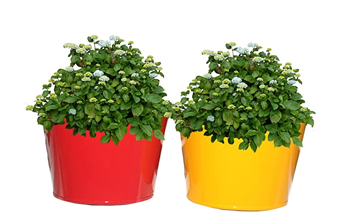 First Smart Deal Metal Wall Planter Multi - Pack of Two