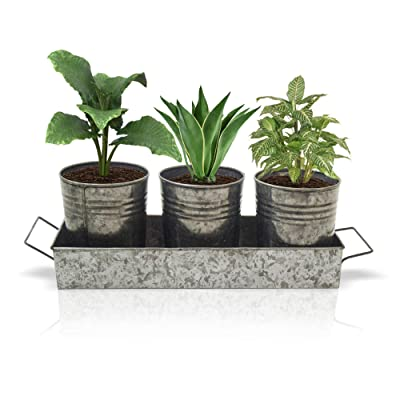 Galvanized Metal Garden Pots with Tray Set of 4 - Bucket Planter Pail - Flower Pots x3, Tray x1 - Garden Planters Indoor/Outdoor : Garden & Outdoor