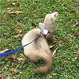 Ferret Harness and Leash Adjustable, Blue Sakura