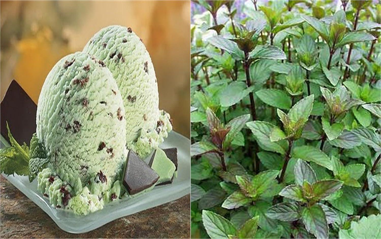 Amazon.com : HEIRLOOM NON GMO Chocolate Mint 50 seeds (Smells like ...