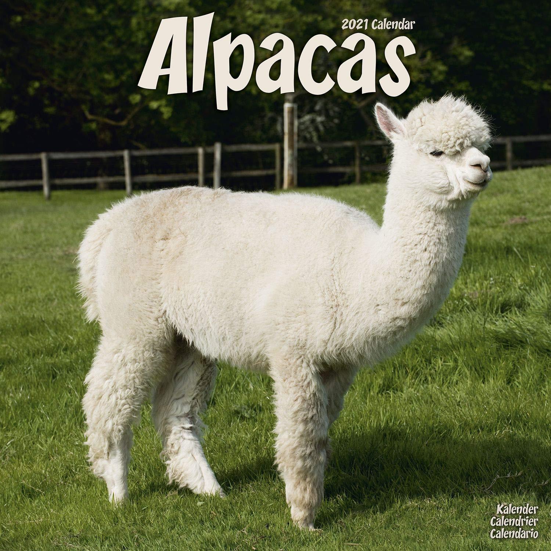 Alpaca Wall Calendar   Cute Animal Calendar   Calendars 2020