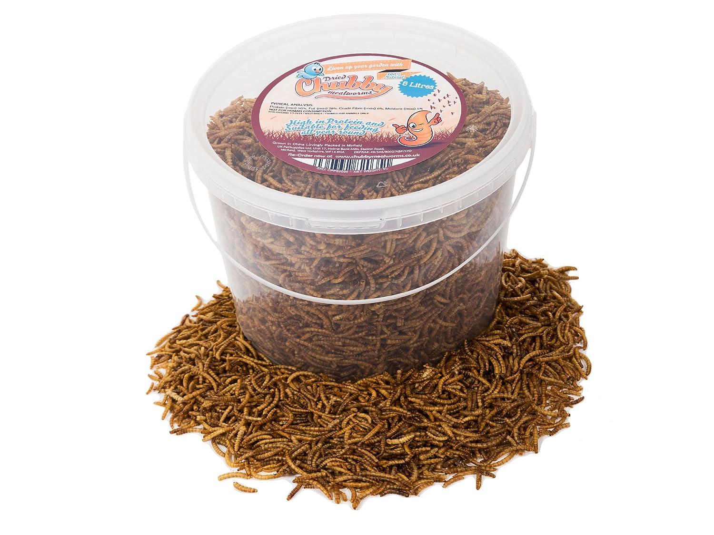 5 litros gusanos disecados para comida de pájaros. Chubby Mealworms CPP82035