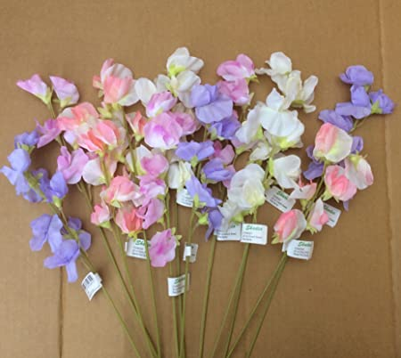 Pack x12 stems mixed sweet peas artificial silk flowers 40cm tall pack x12 stems mixed sweet peas artificial silk flowers 40cm tall mightylinksfo Gallery