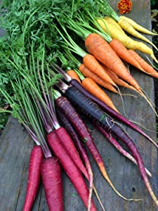 Rainbow Blend Carrot Seeds, 500+ Premium Heirloom Seeds, Rare Varieties, Colorful Mix & Fantastic Addition to Your Garden! (Isla's Garden Seeds), 85% Germination Rate, Non GMO, Highest Quality