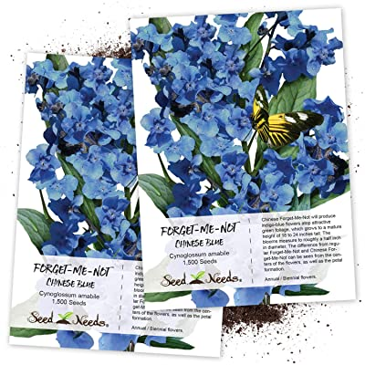 Seed Needs, Chinese Forget-Me-Not (Cynoglossum amabile) Twin Pack of 1, 500 Seeds Each : Flowering Plants : Garden & Outdoor
