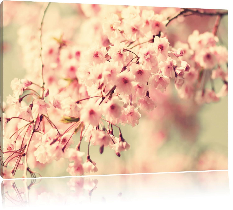 Amazon.de: Kirschblüten Format: 120x80 cm auf Leinwand, XXL riesige ...