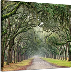 "Landscape Artwork Pictures Canvas Prints: Spanish Moss Covered Green Oak Trees on Forest Path in Fall Photographic Image for wall Arts (24"" x 18"", Green)"