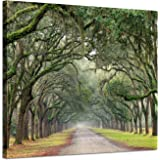 Landscape Artwork Pictures Canvas Prints: Spanish Moss Covered Green Oak Trees on Forest Path in Fall Photographic Image…