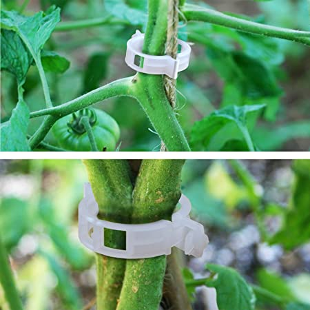BenefitUSA planta apoyo jardín clips 25 mm Clips de enrejado de ...