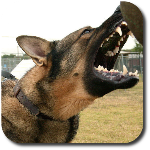 Dog Whistle High Pitched Dog Trainer ()
