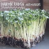 Organic Radish Sprouting Seeds   1 Pound Non-GMO